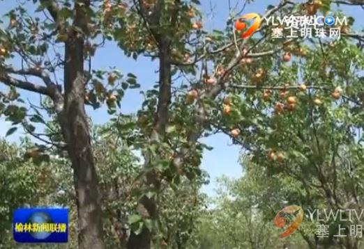 三年植绿大行动—发展经济林产业 推动县域绿色经济增长